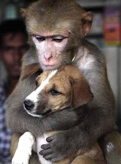 תמונה אהבה בין חיות