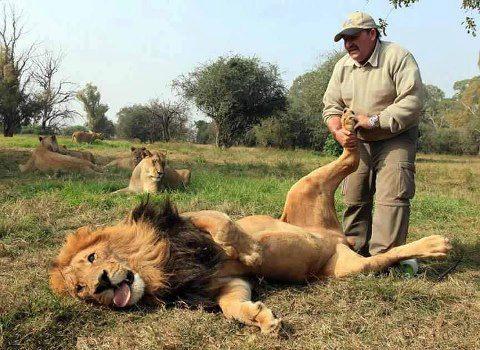 תמונה גם אריה מתפנק