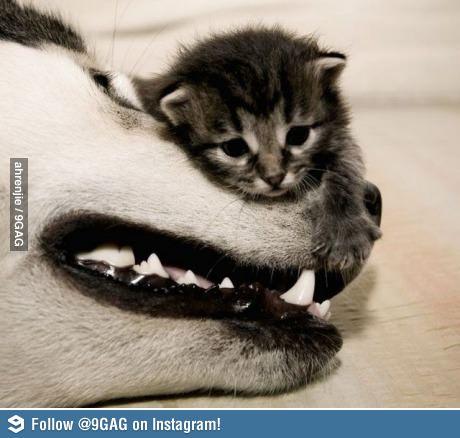 תמונה חתול אמיץ
