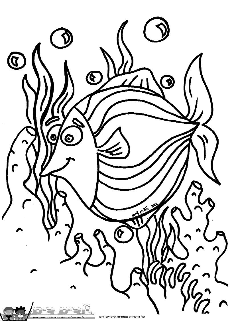 דפי צביעה דג