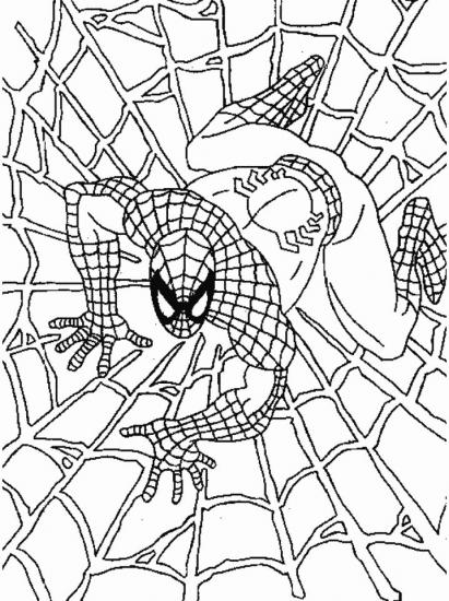 דפי צביעה ספיידרמן על קורי עכביש