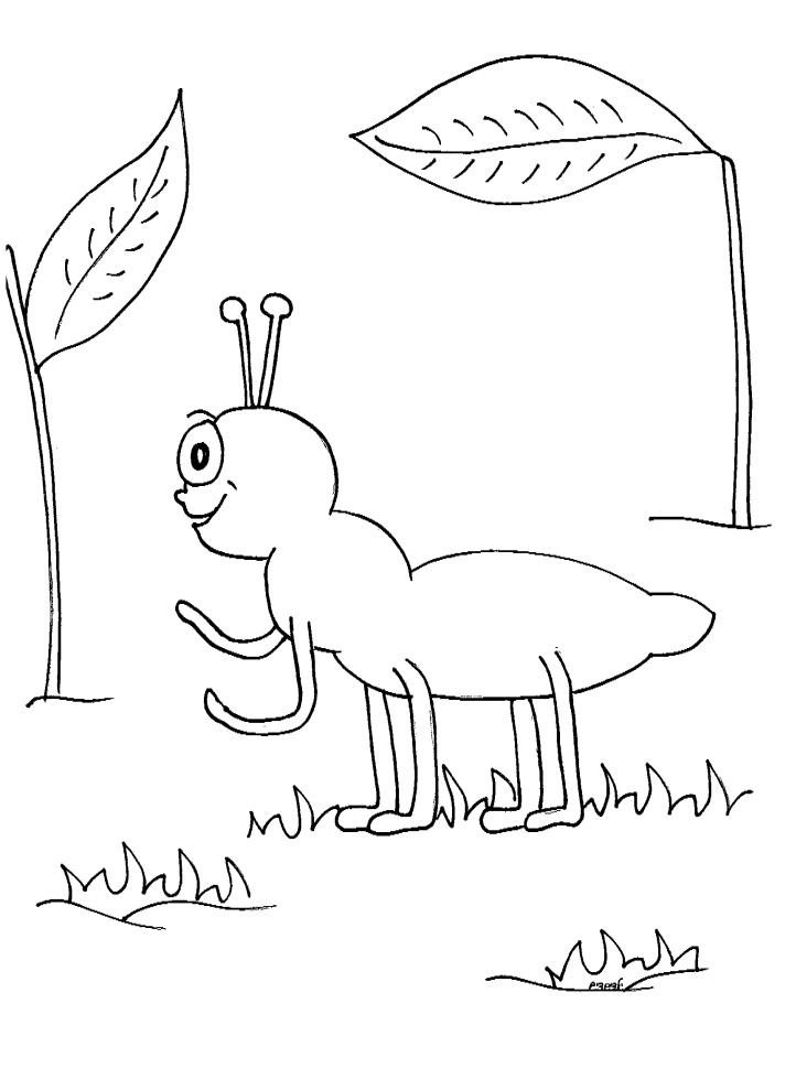 דף צביעה של נמלה