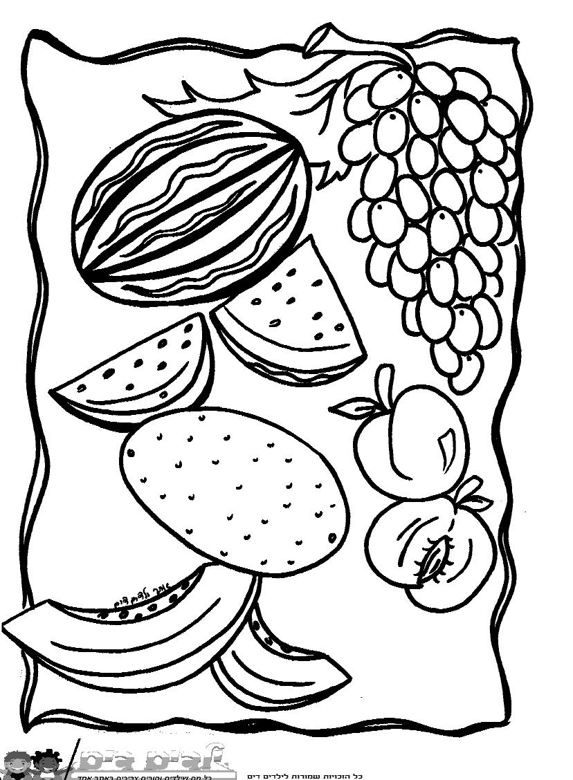 דף צביעה פירות העונה