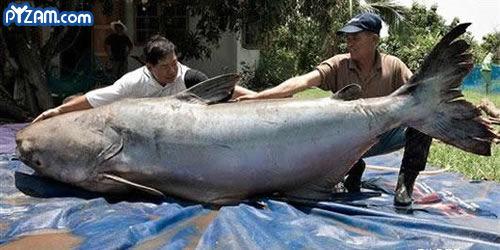 תמונה דג גדולללל