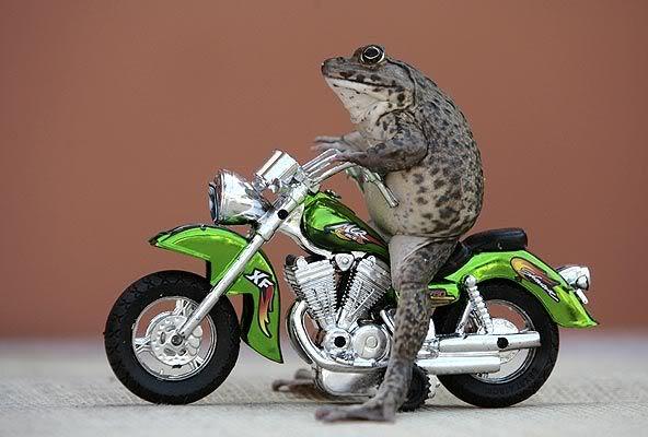 תמונה האופנוען