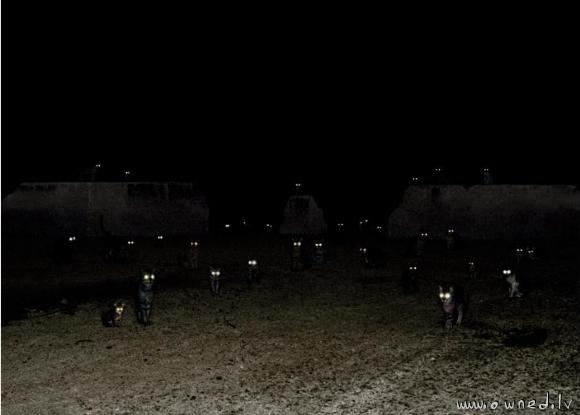 תמונה קוצה של חתולים בלילה