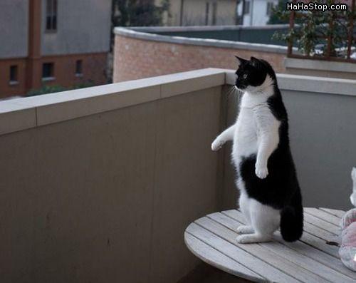 תמונה של חתול עומד