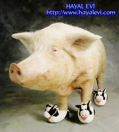 תמונה חזיר עם נעלי בית