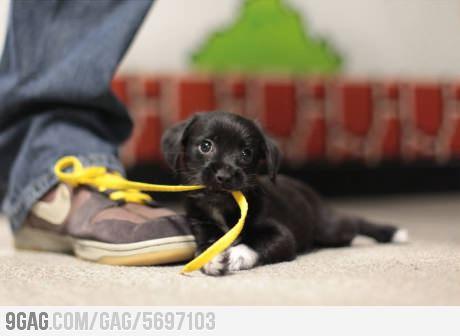 תמונה כלב חמוד וקשור