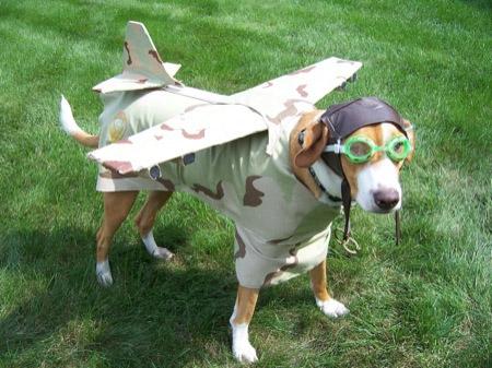 תמונה כלב מחופש לטייס בפורים