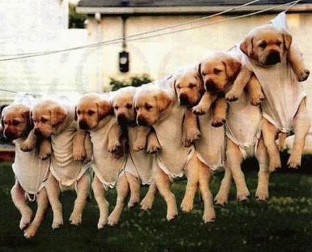 תמונה כלבים אחרי כביסה