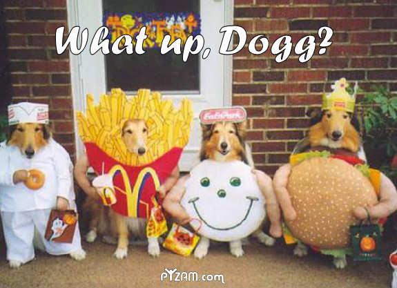 תמונה כלבים מחופשים