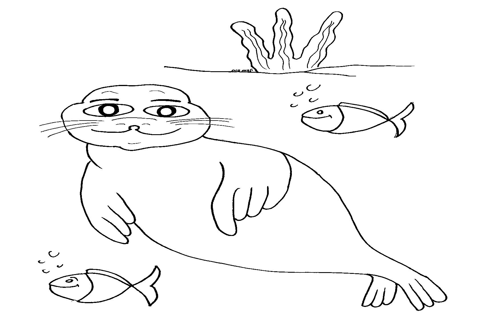 דף צביעה כלב ים