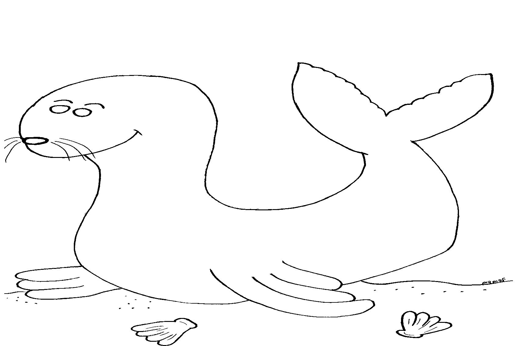 צביעה כלב ים