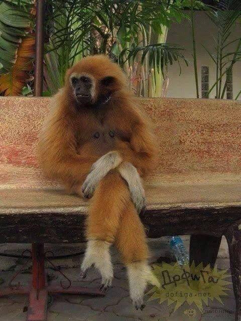 תמונה קוף בהמתנה