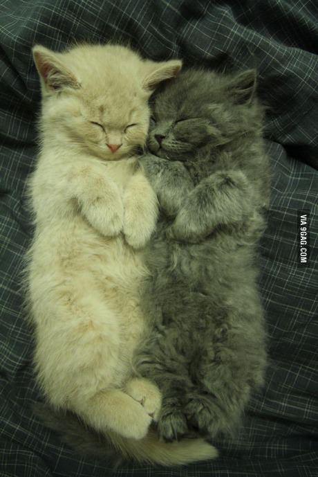 תמונה חתולים מתפנקים