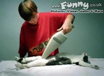 תמונה ניקוי חתול בשואב
