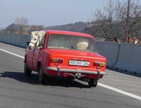 תמונה סוס בתוך אוטו 2