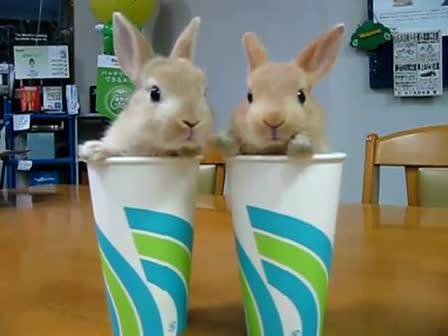 סרטון ארנבונים חמודים