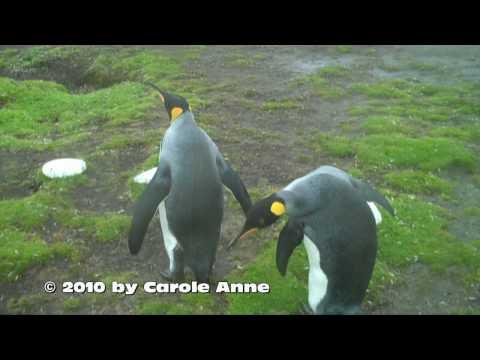 סרטון דילמת הפינגווינים