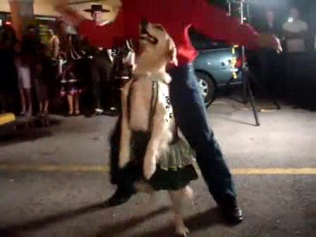 סרטון כלב רוקד סמבה