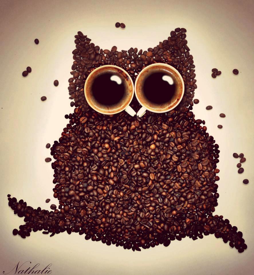 תמונה ינשוף מפולי קפה